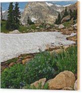Wildflowers In The Indian Peaks Wilderness Wood Print