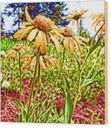 Wildflowers In The Wilds Of Colorado Wood Print