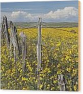 Wildflowers Surround Rustic Barb Wire Wood Print