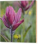 Wildflowers5 Wood Print by Aaron Spong