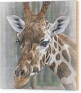 Wildlife Giraffe  Wood Print