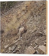 Wildlife Of Montana Wood Print by Yvette Pichette