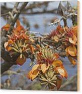 Wiliwili Flowers - Erythrina Sandwicensis - Kahikinui Maui Hawaii Wood Print