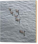 Willamette River Ducks Wood Print