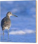 Willet In The Water Wood Print