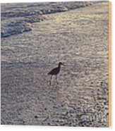 Willet In The Waves Wood Print