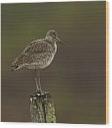 Willet On A Post Wood Print
