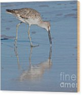 Willet Reflection Wood Print