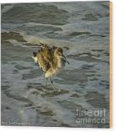 Willet Washing 1 Wood Print