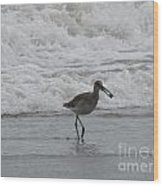 Willet With A Catch Wood Print