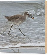 Willet With Mole Crab Wood Print