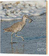 Willet With Sand Crab Wood Print