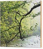 Williams River Mist Wood Print