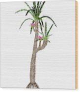 Williamsonia Gigas Prehistoric Tree Wood Print