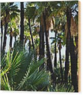 Willis Palm Oasis Wood Print