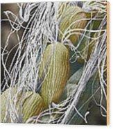 Willow Herb Seed Pod, Sem Wood Print