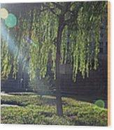 Willow Magic Wood Print