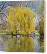 Willow Tree Water Reflection Wood Print by Matthias Hauser