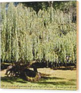 Willow Tree With Job Verse Wood Print