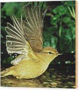 Willow Warbler Phylloscopus Trochilus Wood Print