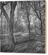 Willows In Spring Park Wood Print