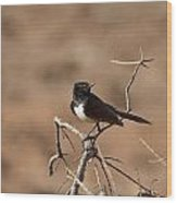 Willy Wagtail V7 Wood Print
