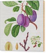 Wilmot's Early Violet Plum Wood Print