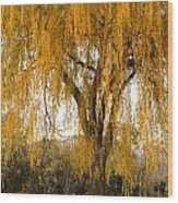 Willow Yellow Rain  Wood Print
