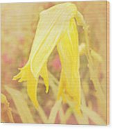 Wilted Yellow Lily In The Dew Wood Print