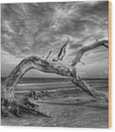 Wind Bent Driftwood Black And White Wood Print