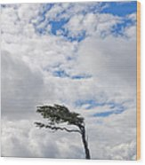 Wind-bent Flag Tree In Tierra Del Fuego Wood Print