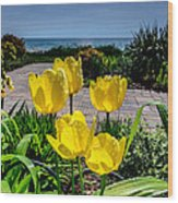 Wind Point Tulips Wood Print