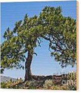 Lonesome Pine Tree Wood Print