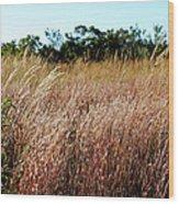 Windswept Grassy Meadow Wood Print