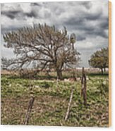Wind Swept Kansas Tree Wood Print