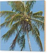 Windblown Coconut Palm Wood Print