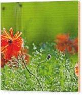 Windblown Poppies Wood Print
