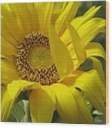 Windblown Sunflower One Wood Print