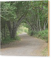 Winding Country Road Wood Print