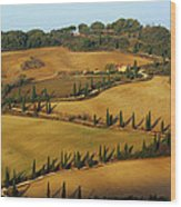 Winding Road And Cypress Trees In Tuscany 1 Wood Print