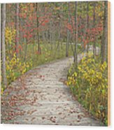 Winding Woods Walk Wood Print