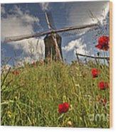 Windmill Poppies  Wood Print