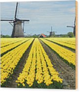 Windmills And Tulips Wood Print