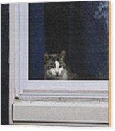 Window Cat Wood Print