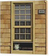 Window Cat    No.1 Wood Print