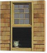 Window Cat    No.3 Wood Print