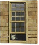 Window Cat    No.4 Wood Print