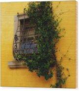 Window In Florence Wood Print