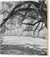 Window Oak - Bw Wood Print