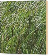 Windswept Cattails Wood Print